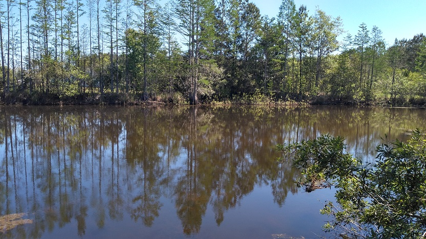 Catfish and Sheep Farm for sale in Vernon Florida